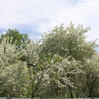 Весна :: Людмила