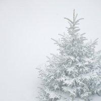 Последний крик зимы ... :: Елена Нор