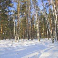 На лесной поляночке . :: Мила Бовкун