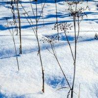 Цветы зимой :: Людмила Финкель
