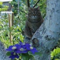 Кошка Мартрёна на яблоне :: Юрий А. Денисов