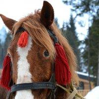 Лошадка из Закарпатья :: Оксана Лаврентьева