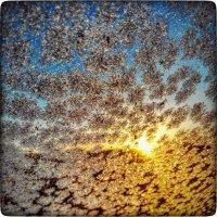утро морозное :: Sergey Bagach