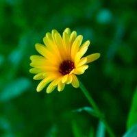 Цветы. :: Андрей Иванов