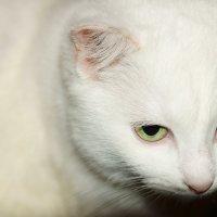 Домашний кот. :: Андрей Иванов