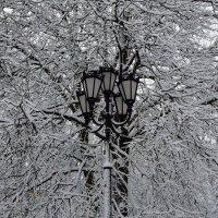 Зимний этюд 4 :: Константин Жирнов