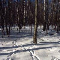 Img_2300 - Вариации на тему приближения Весны :: Андрей Лукьянов