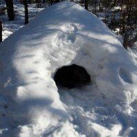 """База-пещера """"медвежья берлога"""". Автор Натан. :: Фотогруппа Весна."""