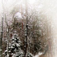 По снежной тропе :: Genych Bartkus