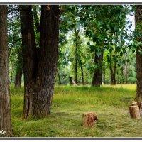 Лесная поляна :: Виктор Новоженин