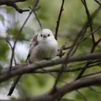 Лесная птаха :: Марина Мишутина