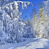 Мороз и солнце, день чудесный!    А.С.Пушкин :: Виталий Половинко