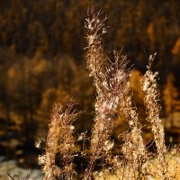 Seasons: Autumn colors 2 :: Сергей Nikon