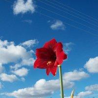Скоро  весна :: Виктор Елисеев