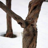 кручусь кажется даже зимой :: Олег Лукьянов
