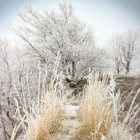 Холодный февраль :: Denis Aksenov