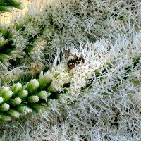 В цветок зарывшись....) :: Natali