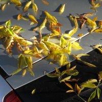 Солнце и листья :: Николай Филоненко