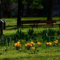 весна :: Olga Stolpovskaya
