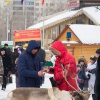Перекур у оленя :: Андрей Липов
