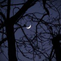 Луна :: Tanika Неделенко