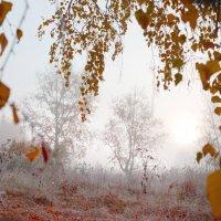 туман на рассвете :: Татьяна Малинина