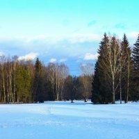 Зима в Павловском парке :: Денис Матвеев