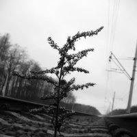 Черно-белая... :: Саша Матвіюк