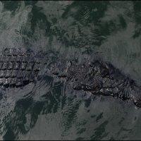 Крокодиловая ферма 4 :: Сергей Андриянов