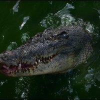 Крокодиловая ферма 2 :: Сергей Андриянов