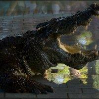 Крокодиловая ферма 1 :: Сергей Андриянов