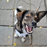dog :: Виктория Мудрицкая