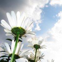 взгляд в небо :: Лариса Корсакова