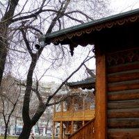 Ранняя весна в усадьбе В. Сукачева :: Оксана Тарасенко