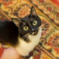 Обдолбаный кот :: Дмитрий Николаев