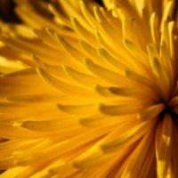 Нечто большее чем просто цветок.. :: Катрин Моргачева