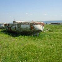 Зеленый океан!!! :: Анатолий Выхристенко