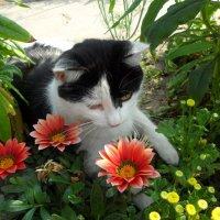 Кошка и её цветы :: Роман Шплеханзидович