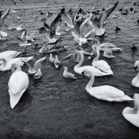 Птичий базар... :: Вахтанг Хантадзе