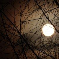 целая,ночь,окно :: Даша Мягкая