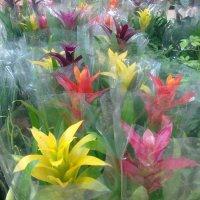 cvety :: жанара zhanara