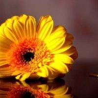 цветок :: Юлия Стальнова