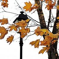 Осень. :: Михаил Малец