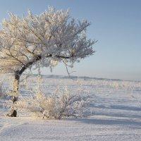 Зима :: Александр Литовченко