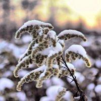 Зимняя картинка . :: Алла Мещерякова