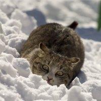 Кошка :: Дмитрий К
