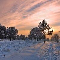 В рассветном лесу :: Николай Белавин