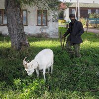 Цыган Саша и его коза Марта :: Николай Белавин