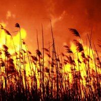 Пожар Анапские плавни №2 :: Alex Romanov
