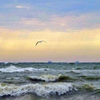 гордо реет буревестник... :: Виктория Колпакова
